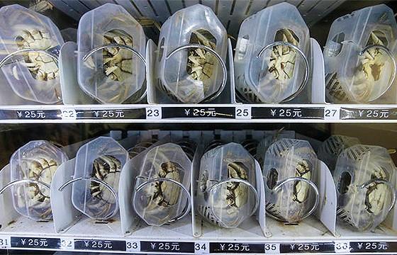 Expendedora de cangrejos para cocinar. Máquinas expendedoras más extrañas del mundo.