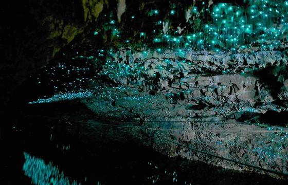 La cueva de Waitomo, Nueva Zelanda. 12 destinos que no cumple las expectativas.