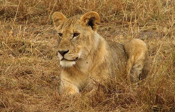 Vista de Reserva Natural Masai Mara