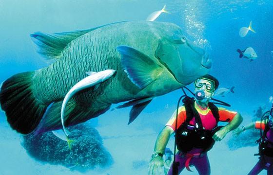 Gran Barrera de Coral, Australia Destinos que visitar para ser más feliz.