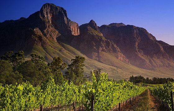 sudafrica-viñedo