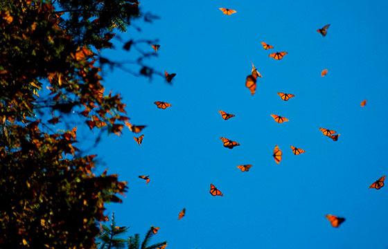 Recorrido de mariposas