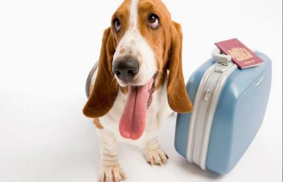 certificado-de-salud-canina