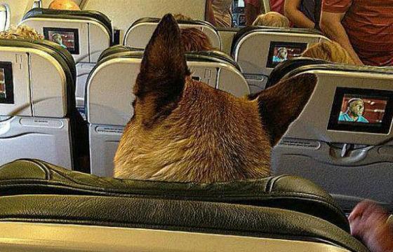 permiso-en-avion