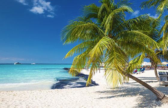 Coconut palm en la playa del caribe-pashapixel-Istock